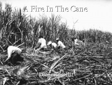 A Fire In The Cane
