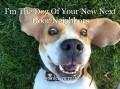 I'm The Dog Of Your New Next Door Neighbors