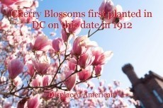 Cherry Blossoms first planted in DC on this date in 1912