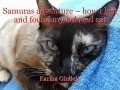Samuras adventure – how I lost and found my beloved cat