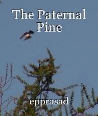 The Paternal Pine
