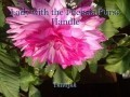 Lady with the Fuchsia Purse Handle