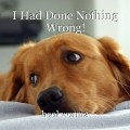 I Had Done Nothing Wrong!