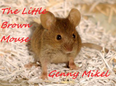 The Little Brown Mouse