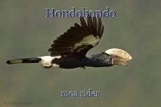 Hondohondo