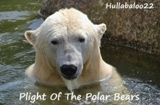Plight Of The Polar Bears