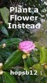 Plant a Flower Instead