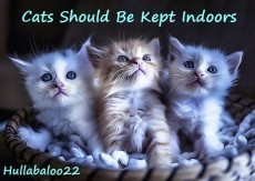 Cats Should Be Kept Indoors