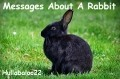 Messages About A Rabbit