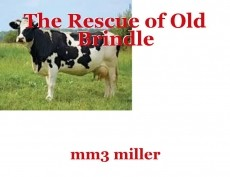 The Rescue of Old Brindle