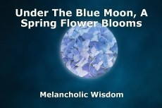 Under The Blue Moon, A Spring Flower Blooms
