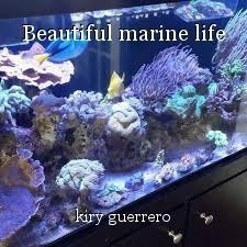 Beautiful marine life