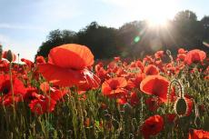 A Heart That Never Cried - New Poem for Rememberence Day