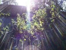 Shining Oneness
