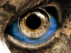 Eye's Of Flies
