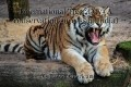 International Tiger Day (A conservation success in India)