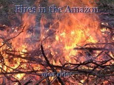 Fires in the Amazon