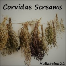 Corvidae Screams