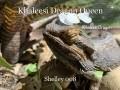 Khaleesi Dragon Queen