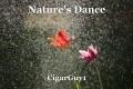 Nature's Dance