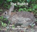 The Rabbit, a Harvey Short Story