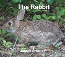 The Rabbit, a Harvey Short Story