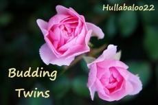 Budding Twins