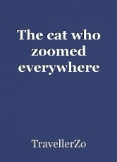 The cat who zoomed everywhere