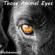 Those Animal Eyes