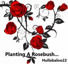 Planting A Rosebush...