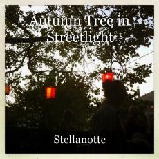 Autumn Tree in Streetlight