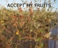 ACCEPT MY FRUITS