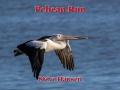 Pelican Run