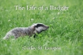 The Life of a Badger