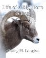 Life of a Big Horn Sheep
