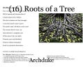 (16) Roots of a Tree