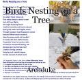 Birds Nesting on a Tree