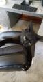 The Meow Meow Polka