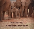 A Mother's Devotion