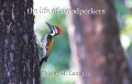 the life of woodpeckers
