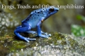 Frogs, Toads and Other Amphibians