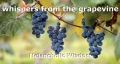 whispers from the grapevine