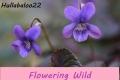 Flowering Wild