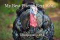 My Best Friend Bert - #25