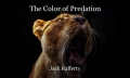 The Color of Predation