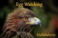 Egg Watching