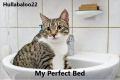 My Perfect Bed