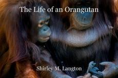 The Life of an Orangutan