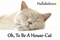 Oh, To Be A House-Cat