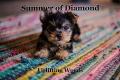 Summer of Diamond